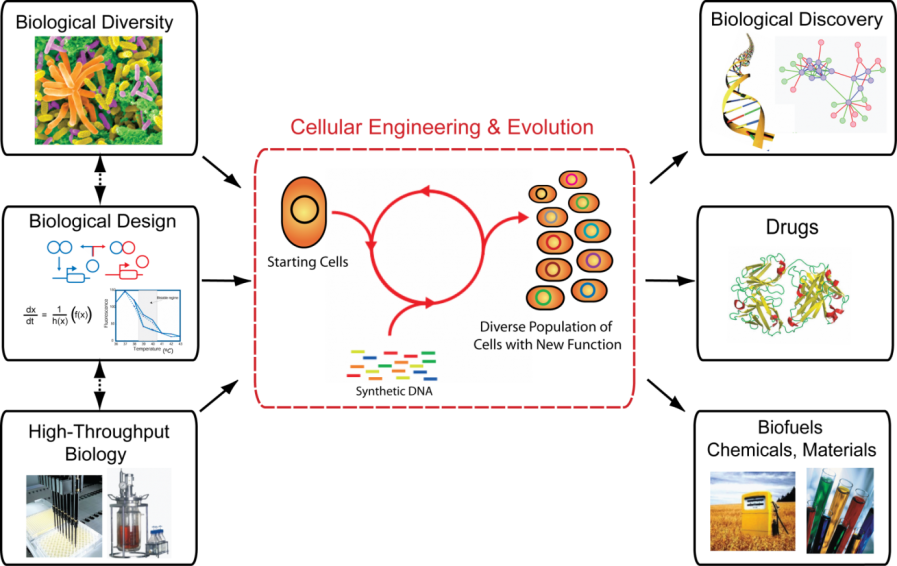 Engineering and Evolving Biology.   An integrated approach to better understand, engineer and harness biological systems.